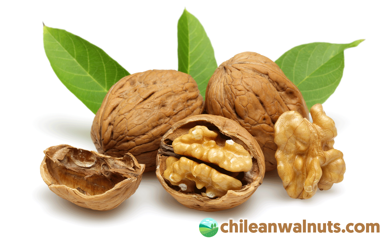 Benefits of Walnuts - Chilean Walnuts
